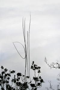 Marco Kaufmann photography